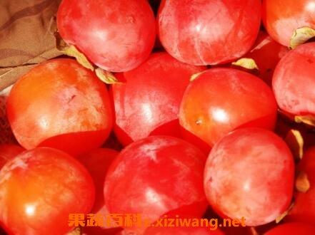 柿子怎么催熟 柿子如何快速催熟【资讯】
